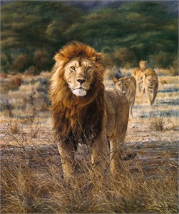 "Simon Combes Limited Edition Fine Art Giclée Canvas: ""In His Prime"""