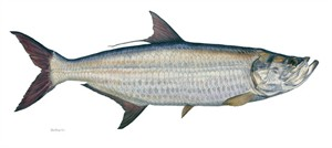 """Flick Ford Handsigned and Numbered  Limited Edition Canvas Giclee: """"Tarpon"""""""