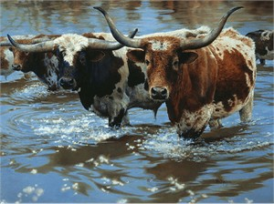 """Bonnie Marris Handsigned and Numbered Limited Edition Canvas Giclee:""""Crossing the Big Sandy"""""""