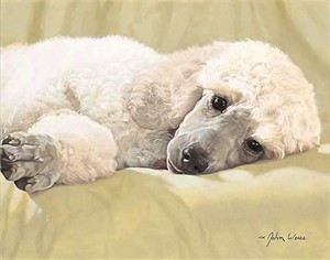 "John Weiss Limited Edition Print:""Best Loved Breeds: Whtie Standard Poodle"""