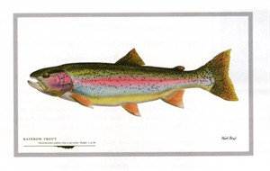 "Flick Ford Artist Handsigned Open Edition Giclee Print on Paper :""Rainbow Trout"""