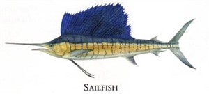 """Flick Ford Artist Handsigned Open Edition Giclee Print on Paper :""""Sailfish """""""