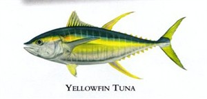 "Flick Ford Artist Handsigned Open Edition Giclee Print on Paper :""Yellowfin Tuna """