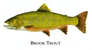 """Flick Ford Artist Handsigned Open Edition Giclee Print on Paper :""""Brook Trout """""""