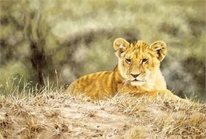 """Simon Combes Limited Edition Fine Art SmallWorks™ Giclée Canvas:""""Lion Cub"""""""