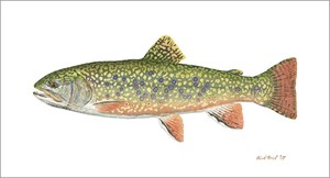 "Flick Ford Handsigned and Numbered Fine Art SmallWorks™ Giclée Canvas:""Pennsylvania Brook Trout"""