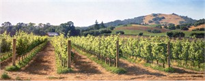 "June Carey Hand Signed and Numbered Limited Edition Canvas Giclee:""Vineyard Before the Harvest"""