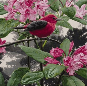 "Rod Frederick Handsigned and Numbered Limited Edition Canvas:""Scarlet Tanager"""