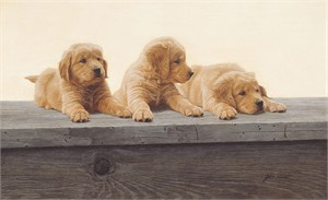 "John Weiss  Hand Signed and Numbered Limited Anniversary Edition™ Gallery Wrap Canvas Giclee:""Golden Retriever Puppies"""