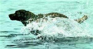 "Lesley Harrison Handsigned & Numbered Limited Edition Print:""Making Waves"""