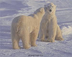 "Daniel Smith Artist Hand-Signed Limited Edition Giclee Canvas:""Season's Greetings (Polar Bears)"""