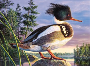 """Kim Norlien Handsigned and Numbered Limited Edition :""""2000 Minnesota Duck Stamp"""""""