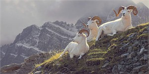 """Daniel Smith Handsigned and Numbered Limited Edition Canvas Giclee:""""Summit Sanctuary"""""""