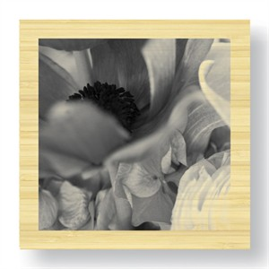 """Stacy Bass Limited Edition Ready to Hang Giclee on Sustainable Bamboo: """"Botanical Study 12"""""""