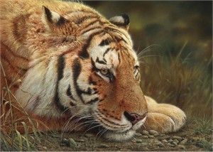 "Denis Mayer Jr Hand Signed and Numbered Limited Edition Canvas Giclee:""Beauty at Rest"""