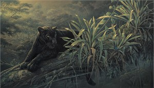 "Denis Mayer Jr Hand Signed and Numbered Limited Edition Canvas Giclee:""Pride of the Amazon"""