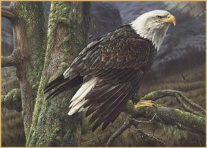 "Denis Mayer Jr Hand Signed and Numbered Limited Edition Canvas Giclee:""Ruler Of The Skies"""
