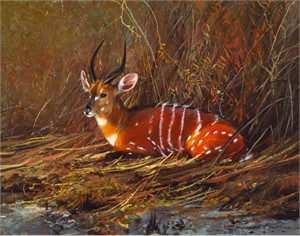 "Michael Coleman Hand Signed and Numbered Limited Edition Giclee:""Chobe Bushbuck, Zambia"""