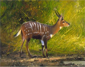"Michael Coleman Hand Signed and Numbered Limited Edition Giclee:""Chobe Bushbuck, Okavango"""