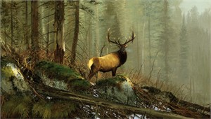 "Michael Coleman Hand Signed and Numbered Limited Edition Giclee:""In the Big Horns - Elk"""