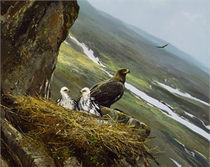 "Michael Coleman Hand Signed and Numbered Limited Edition Giclee:""Regal View - Golden Eagle"""