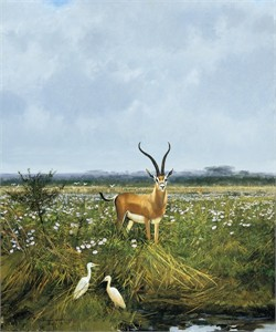 "Michael Coleman Hand Signed and Numbered Limited Edition Giclee:""Grants Gazelle"""