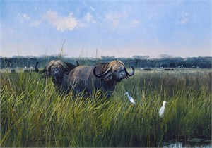 "Michael Coleman Hand Signed and Numbered Limited Edition Giclee:""Cape Buffalo"""