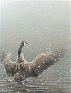 "Robert Bateman Handsigned & Numbered Limited Edition Giclee on Canvas:""Stretching - Canada Goose"""