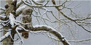 "John Seerey – Lester Limited Edition Print:""Snowy Watch-Great Gray Owl"""
