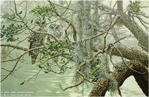 """John Seerey – Lester Limited Edition Print:""""Spanish Mist-Young Barred-Owl"""""""