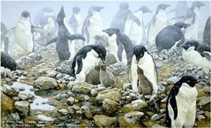 "John Seerey – Lester Limited Edition Print:""Spring Flurry-Adelie Penguins"""