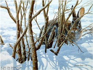 "John Seerey – Lester Limited Edition Print:""Winter Hiding - Cottontail"""