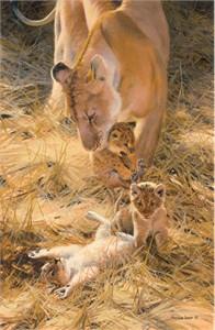 "John Seerey – Lester Limited Edition Print:""Marsh Lions-A New Generation"""
