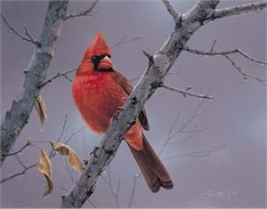 "Daniel Smith Limited Edition Print:""Hot Shot-Cardinal"""