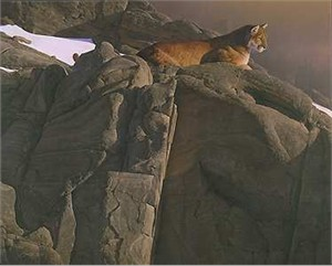 "Daniel Smith Hand Signed and Numbered Limited Edition Print:""Canyon Outpost - Cougar"""