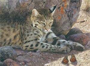 """Carl Brenders Hand Signed and Numbered Limited Edition: """"Off Limits - Bobcat"""""""