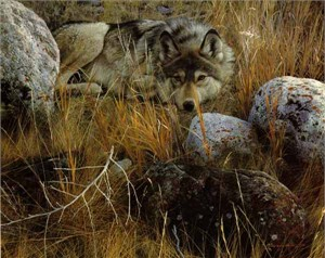 """Carl Brenders Hand Signed and Numbered Limited Edition Renaissance  Canvas Giclee: """"One to One - Gray Wolf"""""""