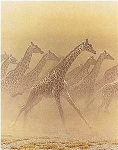 "Robert Bateman  Handsigned and Numbered Limited Edition Renaissance Giclee on Canvas:""Galloping Herd - Giraffes"""