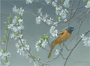"Robert Bateman  Handsigned and Numbered Limited Edition Giclee on Canvas:""Baltimore Oriole and Plum Blossoms"""