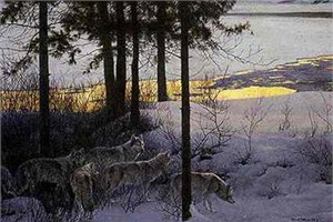 "Robert Bateman Limited Edition Print: ""Edge of Night"""