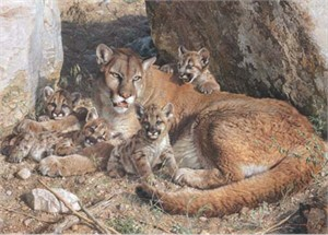 "Carl Brenders Hand Signed and Numbered Limited Edition: ""Rocky Camp - Cougar Family"""