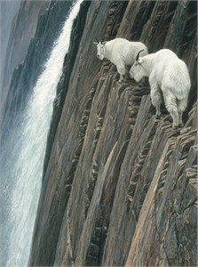 "Robert Bateman Handsigned and Numbered Limited Edition Renaissance Giclee on Canvas:""SHEER DROP - MOUNTAIN GOATS"""