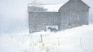 "Robert Bateman Handsigned and Numbered Limited Edition Renaissance Giclee on Canvas:""SHELTER"""