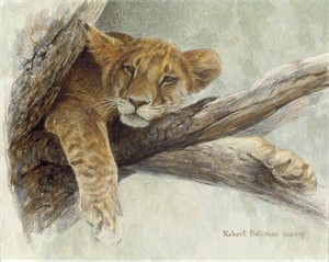 "Robert Bateman Handsigned and Numbered Limited Edition ClasArt Giclee on Board:""UP A TREE - LION CUB"""