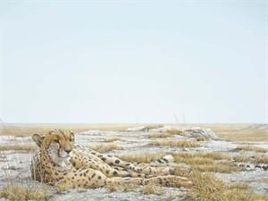 "Robert Bateman Limited Edition Giclee Canvas:""Cheetah Siesta"""