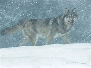 "Robert Bateman Limited Edition Giclee Canvas:""Snowfal - Wolf"""