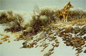 "Robert Bateman Handsigned & Numbered Renaissance Edition Giclee on Canvas: ""Coyote in Winter Sage"""
