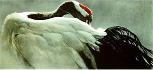 "Robert Bateman Limited Edition Print: ""CEREMONIAL POSE - RED-CROWNED CRANE """