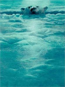 "John Seerey-Lester Limited Edition Print: ""Polar Lookout"""