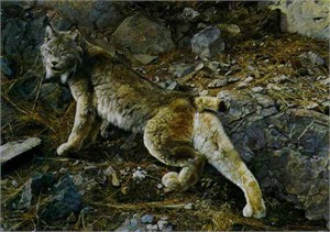 """Carl Brenders Limited Edition Print: """"In Northern Hunting Grounds - Lynx"""""""